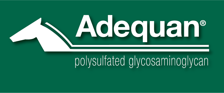 ADEQUAN Logo 2013 White GreenBack